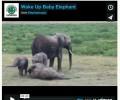 Happy Weekend: Wake Up Baby Elephant