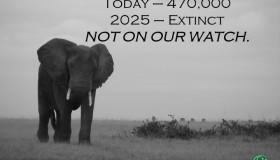 Why Elephantopia