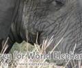 Happy Weekend: World Elephant Day