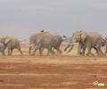 Happy Weekend: Elephant Run!