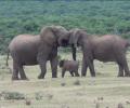 HAPPY WEEKEND: Elephant Family